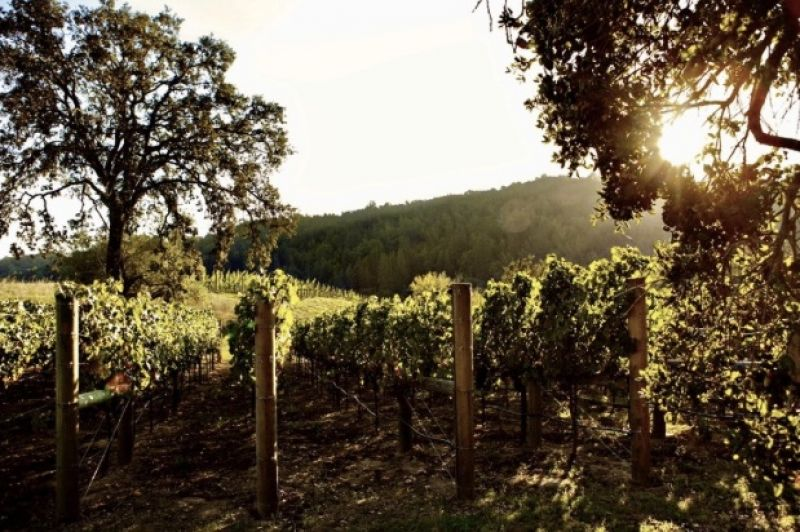 Photo for: Buy Amazing Napa Valley Wines Directly From Anthem Winery and Vineyards